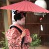 Accompagnement Keikaku Japon mai 2018 - 1